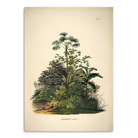 The Dybdahl Co. Mauritia Aculeata Plakat