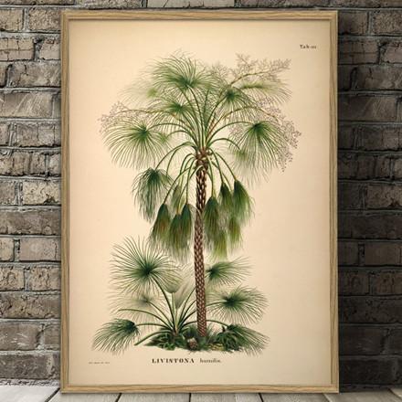 The Dybdahl Co. Livistona Humilis Plakat