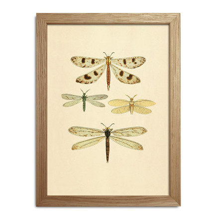 The Dybdahl Co. Insects Mini Print #RC002