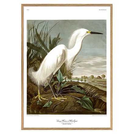 The Dybdahl Co. Snowy Heron Plakat