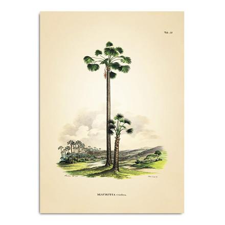The Dybdahl Co. Mauritia Vinifera Plakat
