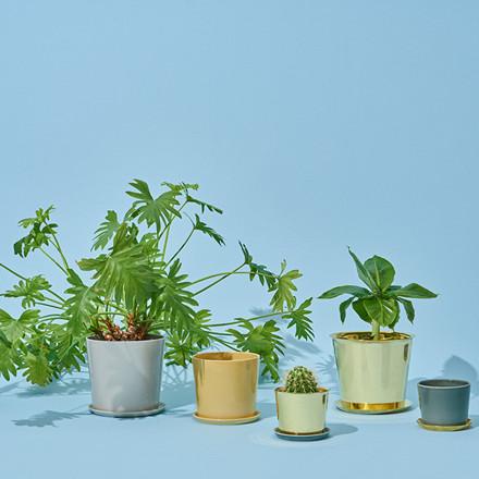 HAY Botanical Family Pot L Brass