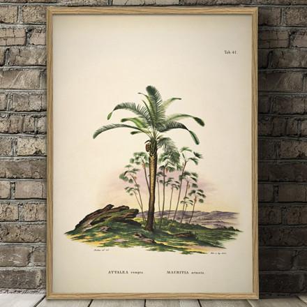 The Dybdahl Co. Attalea Compta Mauritia Armata Plakat