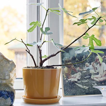 HAY Botanical Family Pot M Warm Yellow