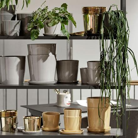HAY Botanical Family Saucer XL Brass