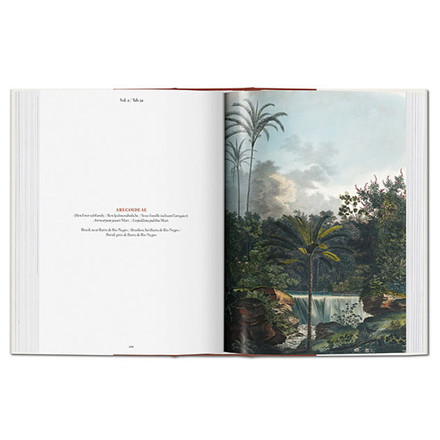 New Mags The Book of Palms Bog