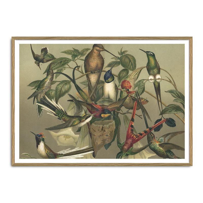 The dybdahl co. – The dybdahl co. hummingbirds plakat fra livingshop