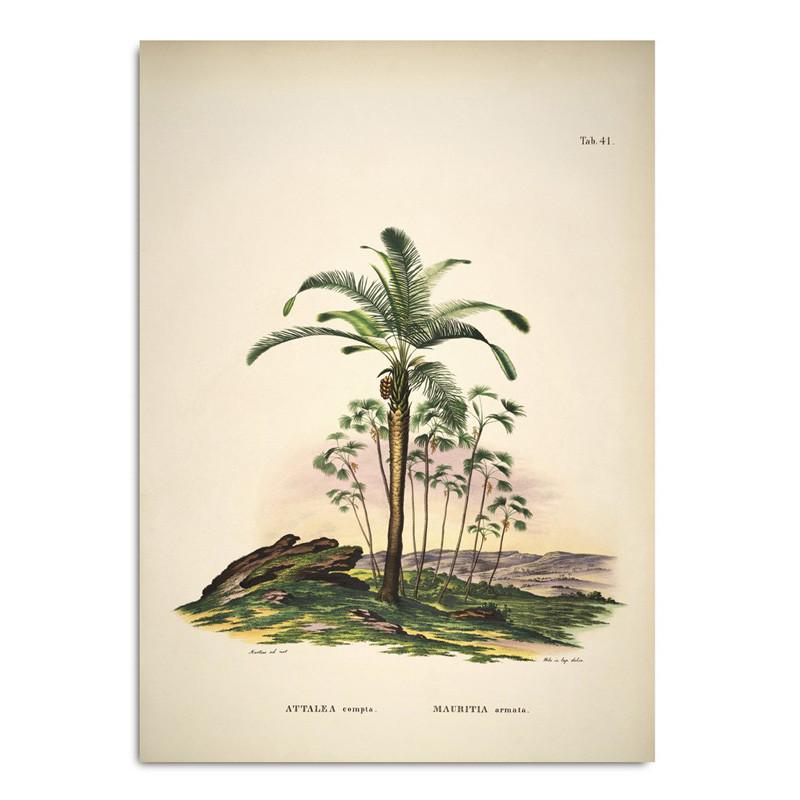 The dybdahl co. The dybdahl co. attalea compta mauritia armata plakat på livingshop