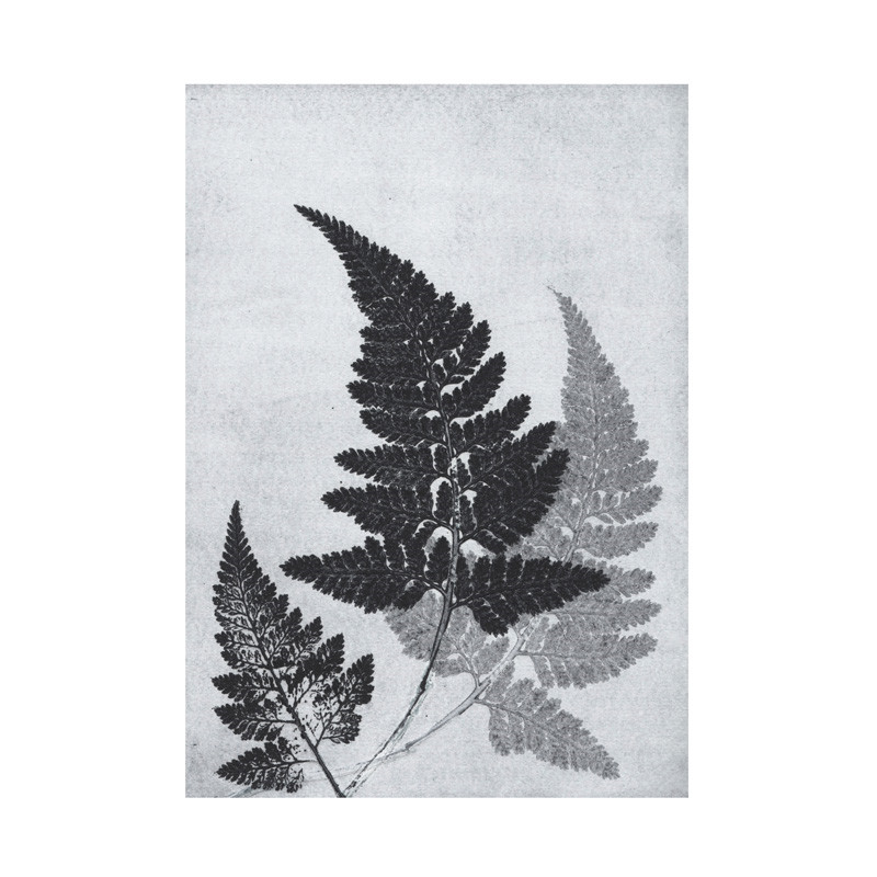 Pernille folcarelli – Pernille folcarelli fern bluegrey postkort på livingshop