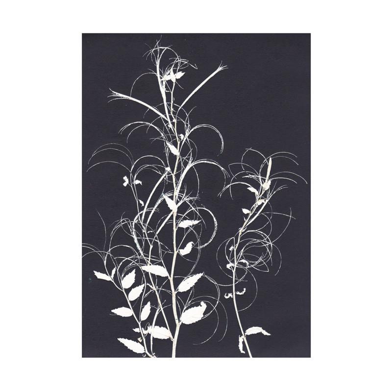 Pernille folcarelli willowherb black postkort fra Pernille folcarelli fra livingshop