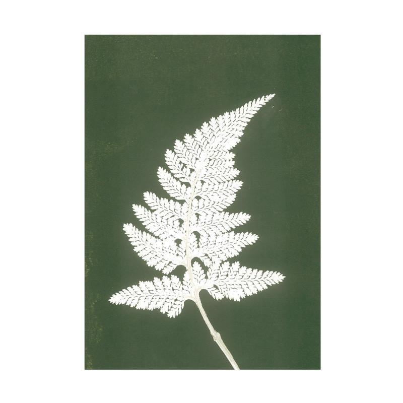 Pernille folcarelli Pernille folcarelli fern white green postkort på livingshop