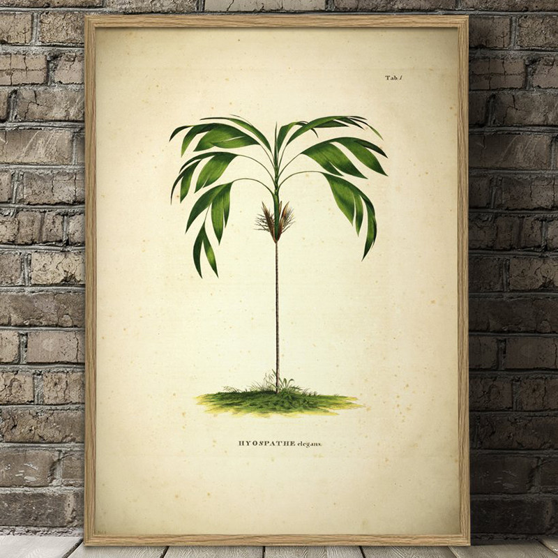 The Dybdahl Co. Hyospathe Elegans Botanical Palm Print