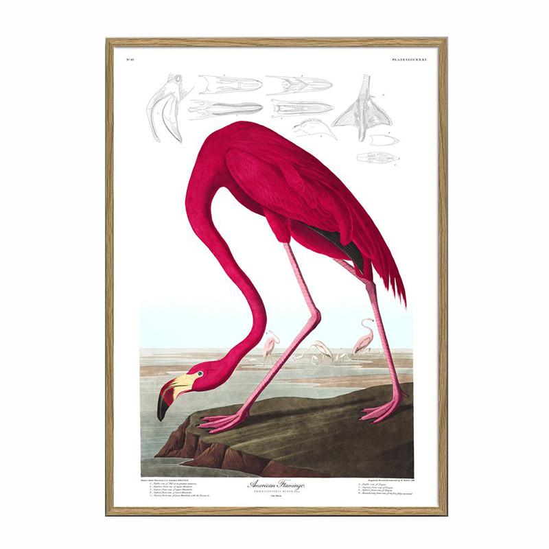 The dybdahl co. american flamingo plakat
