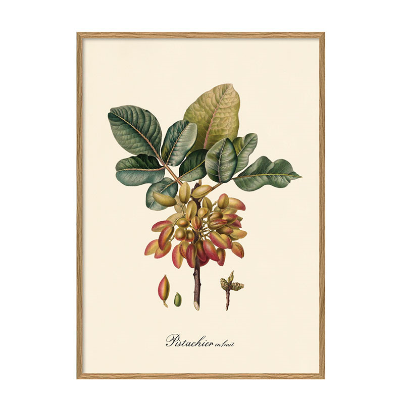 The dybdahl co. pistachier plakat