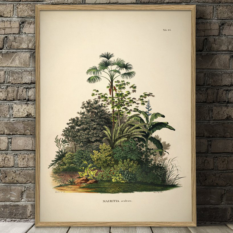 The dybdahl co. – The dybdahl co. mauritia aculeata plakat fra livingshop