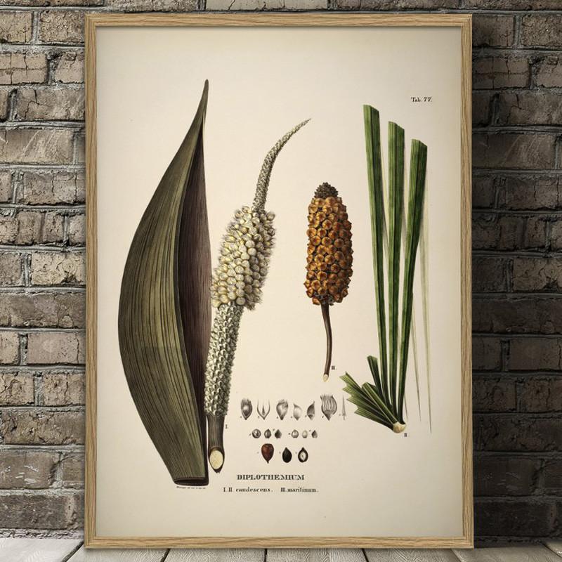 The dybdahl co. diplothemium caudescens & maritimum plakat fra The dybdahl co. på livingshop