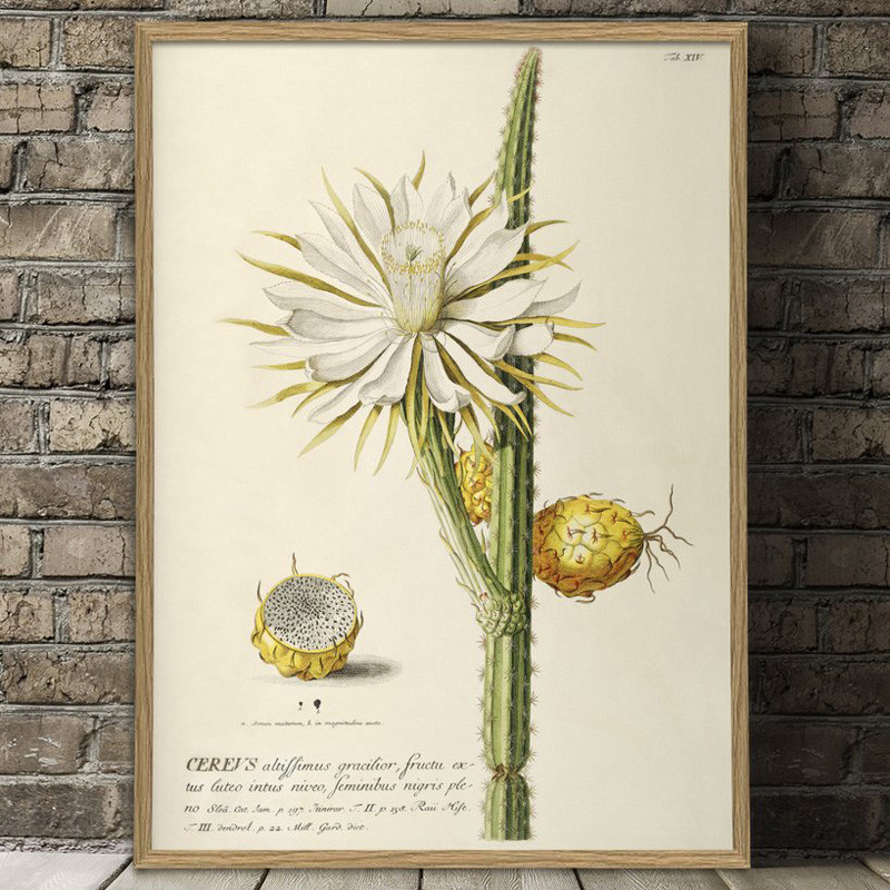 The dybdahl co. – The dybdahl co. cereus plakat på livingshop