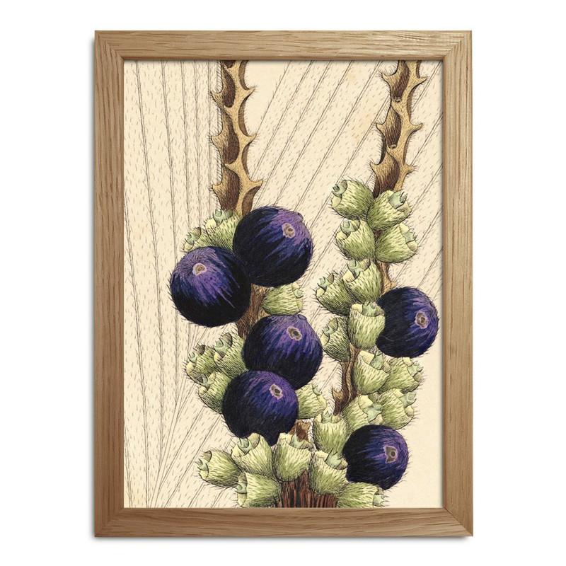 The dybdahl co. – The dybdahl co. plants mini print #rc017 fra livingshop