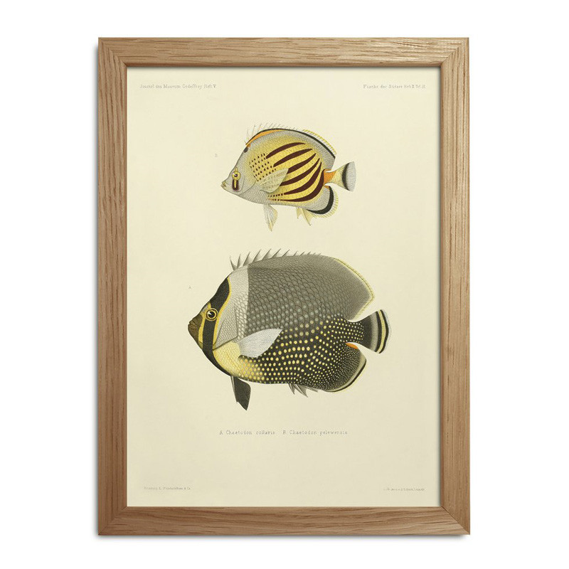 The dybdahl co. fishes mini print #rc030