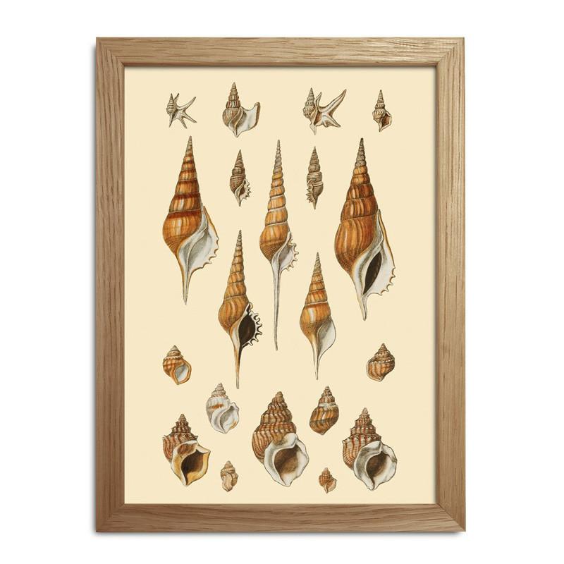 The dybdahl co. sea shells #rc047 fra The dybdahl co. på livingshop