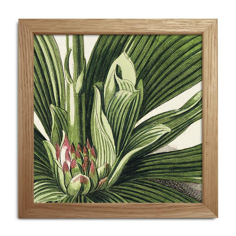 The dybdahl co. – The dybdahl co. plants mini print #sq033 på livingshop