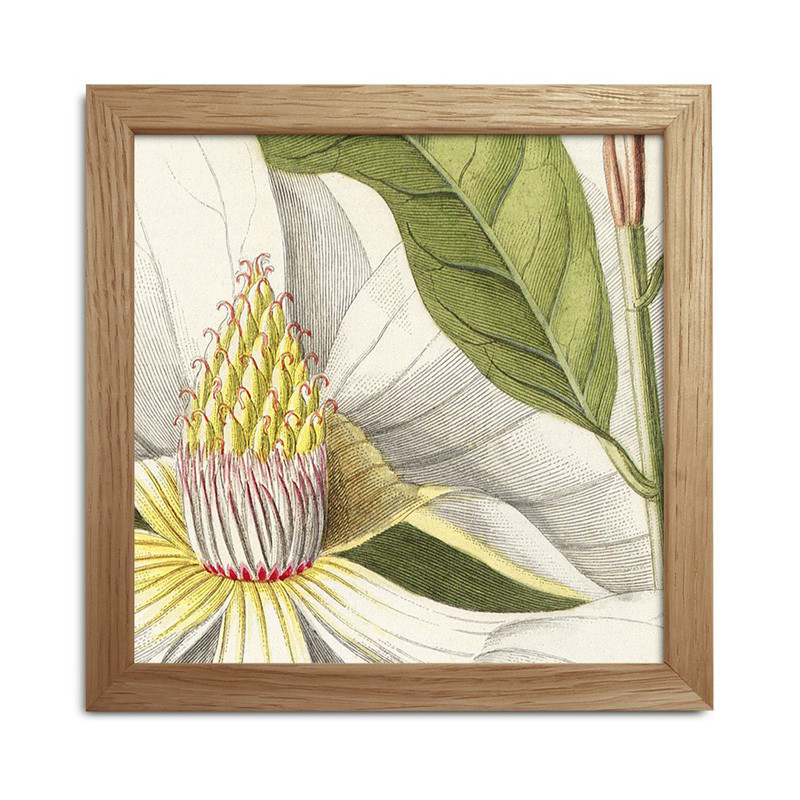 The dybdahl co. plants mini print #sq034 fra The dybdahl co. fra livingshop