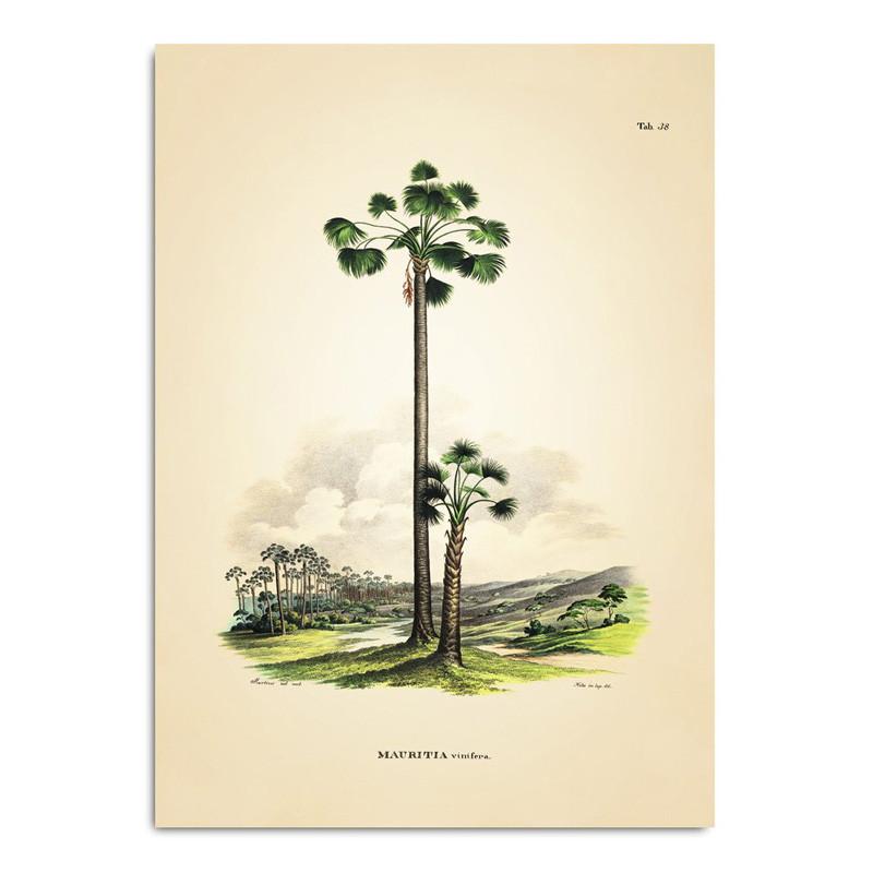 The dybdahl co. – The dybdahl co. mauritia vinifera plakat på livingshop