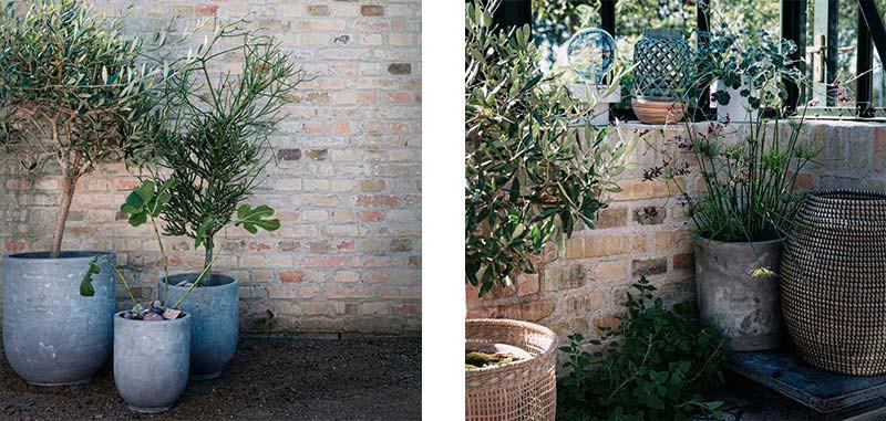 udendørs planter
