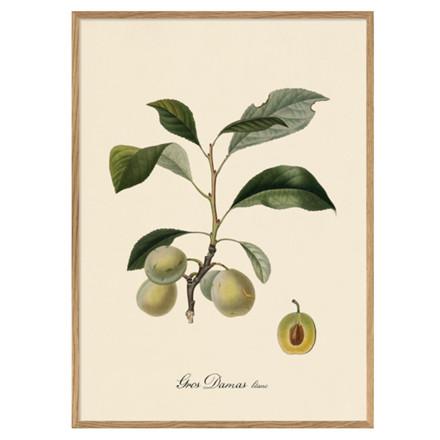 The Dybdahl Co. Gros Damas Iconic Fruits Plakat