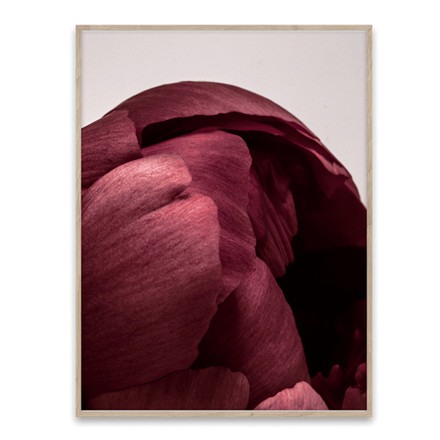 Paper Collective Peonia 01