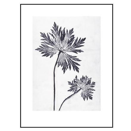 Pernille Folcarelli Illustration Geranium 2 30x40
