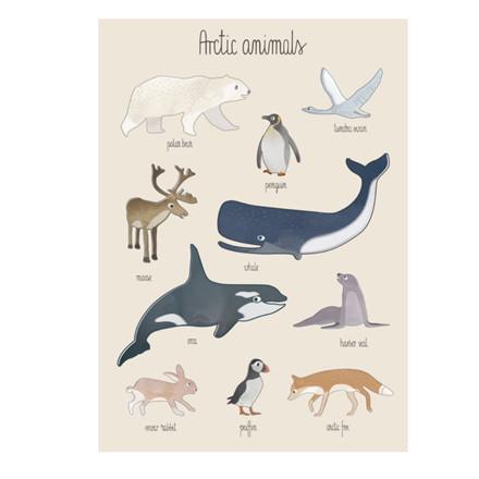Sebra Plakat Arktisk