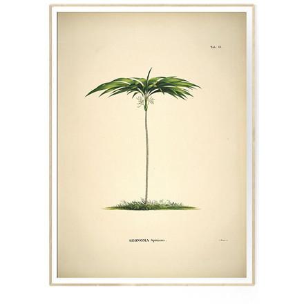 The Dybdahl Co GEONOMA Spixiana Botanical Palm Print