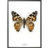 Hagedornhagen Plakat S18 Sommerfugl