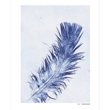 Pernille Folcarelli Feather 3 Illustration m. Ramme