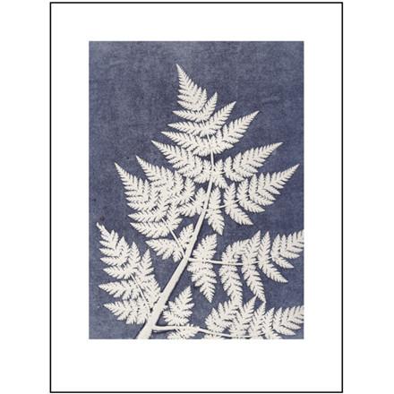 Pernille Folcarelli Illustration Chervil White 30x40 cm