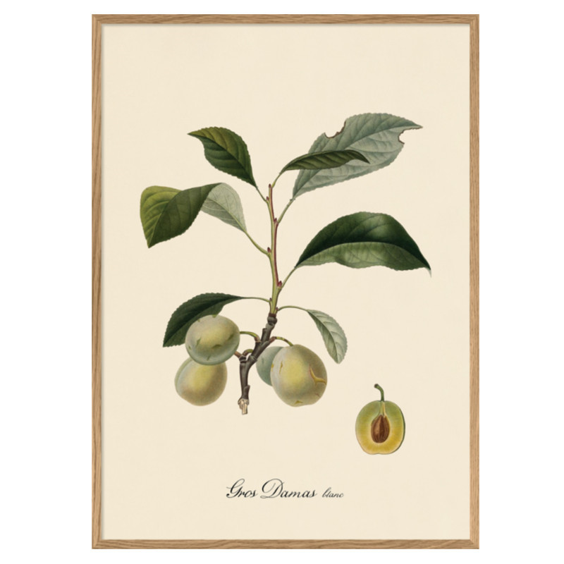 The Dybdahl Co. Gros Damas Iconic Fruits Plakat