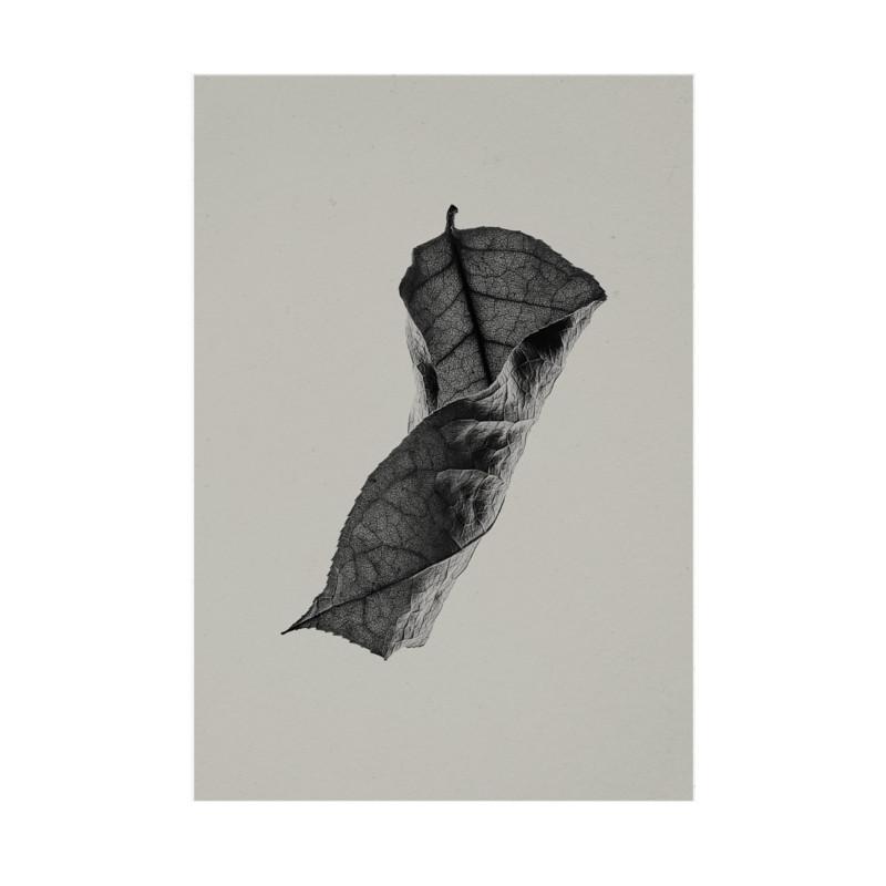 Paper Collective Plakat Sabi Leaf 04