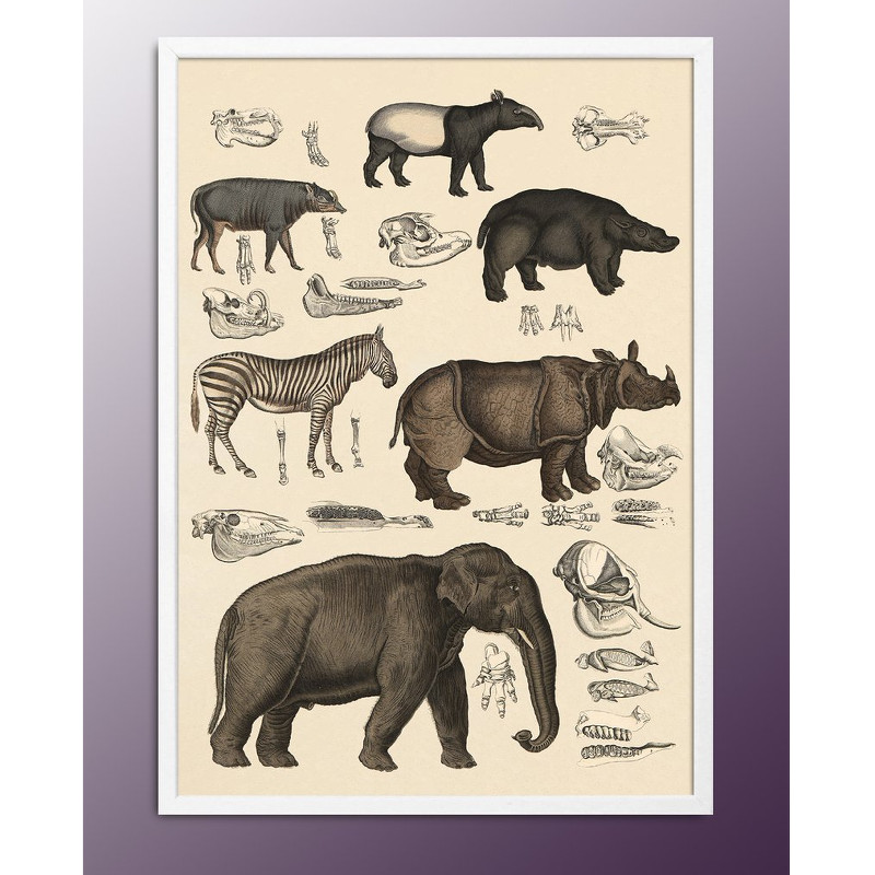 The Dybdahl Co Animalia Print Afrikanske Dyr