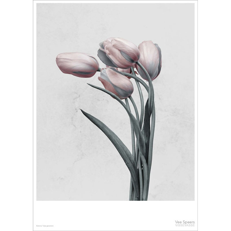 Vee Speers Plakat Botanica, Tulipa Gesneriana