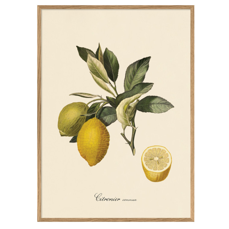The Dybdahl Co. Citronier Iconic Fruits Plakat