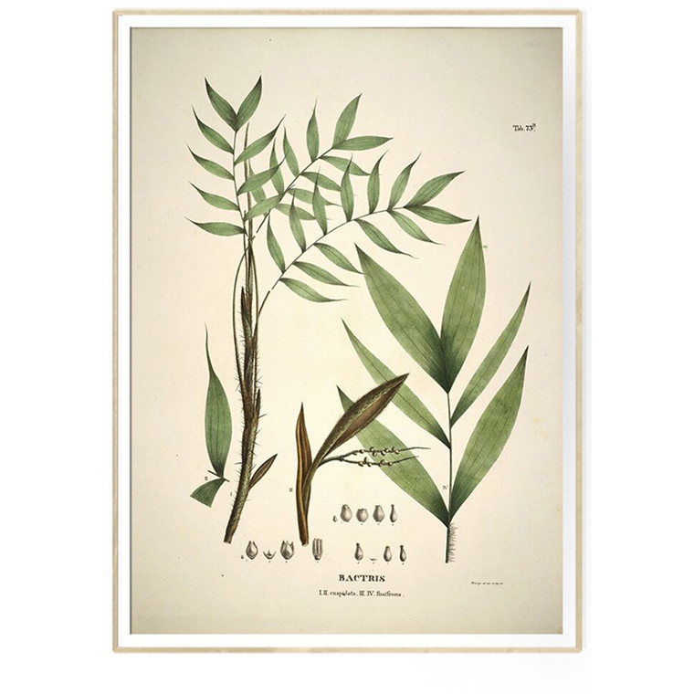 The Dybdahl Co BACTRIS cuspidata & fissifrons Botanical Palm Print