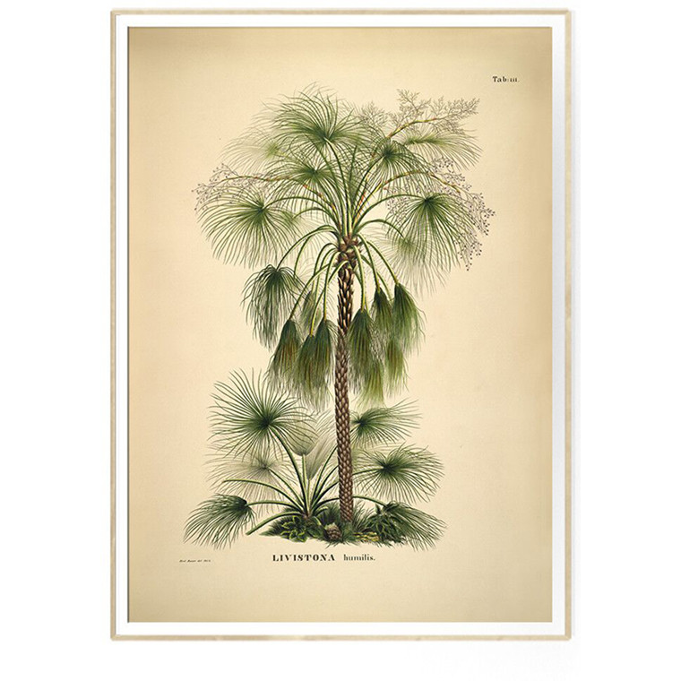 The Dybdahl Co LIVISTONA humilis Botanical Palm Print