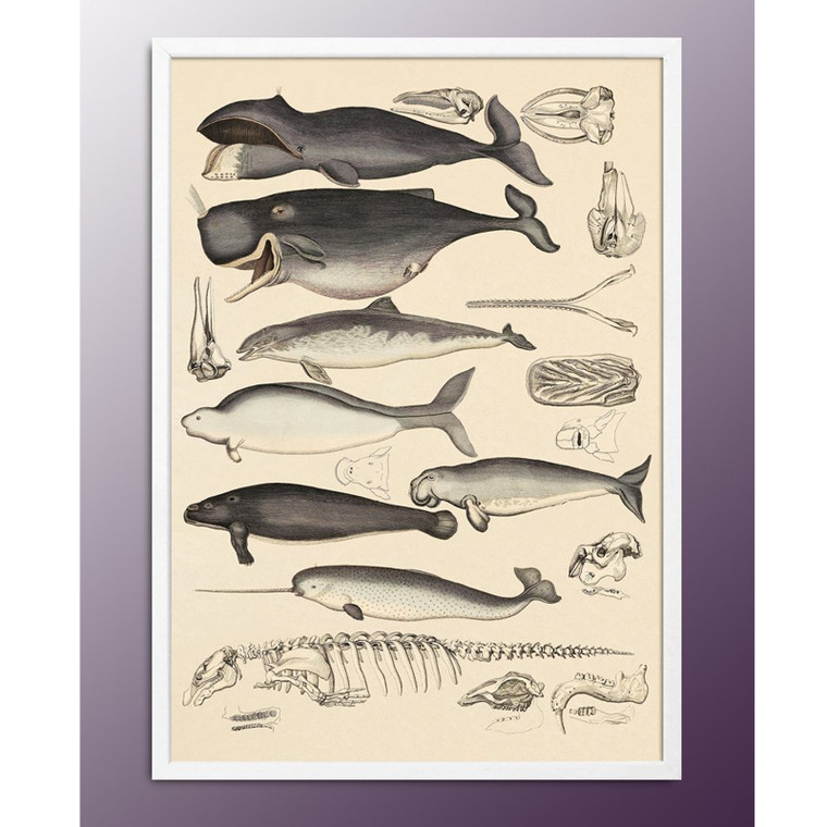 The Dybdahl Co Animalia Print Hvaler