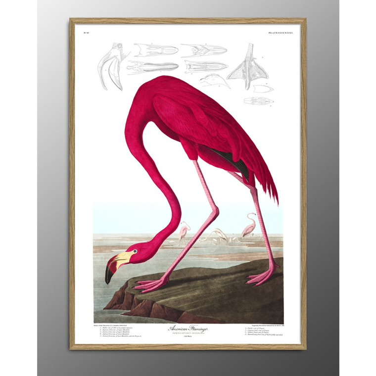 The Dybdahl Co American Flamingo