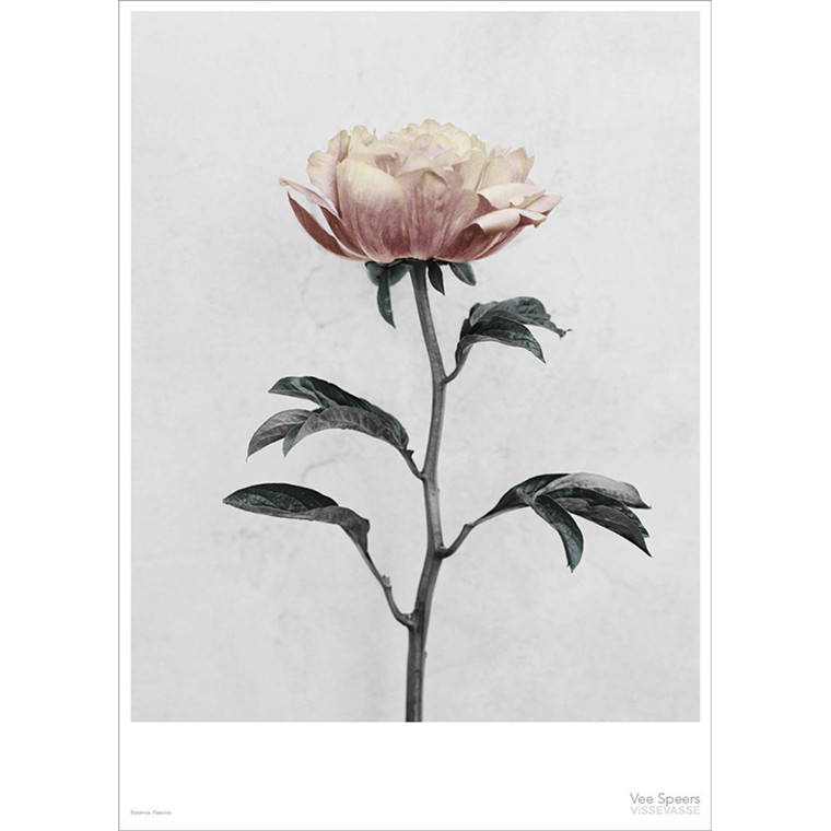 Vee Speers Plakat Botanica, Paeonia