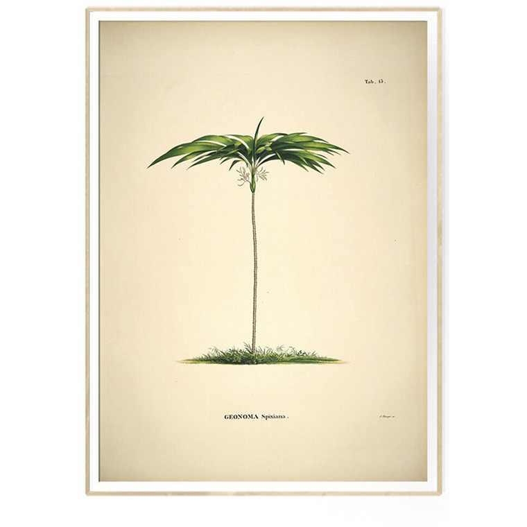 The Dybdahl Co GEONOMA Spixiana Botanical Palm Print