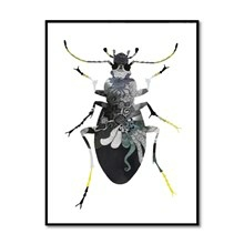 Bob Noon Illustration Beetle