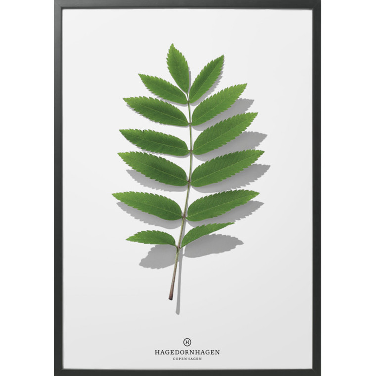 Hagedornhagen Plakat Folium F1