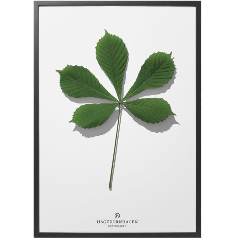 Hagedornhagen Plakat Folium F2